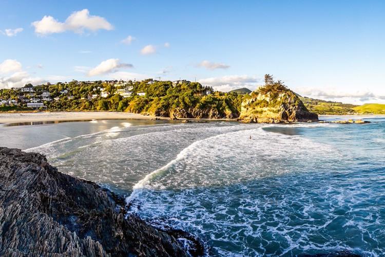 Top Dunedin tourist activities