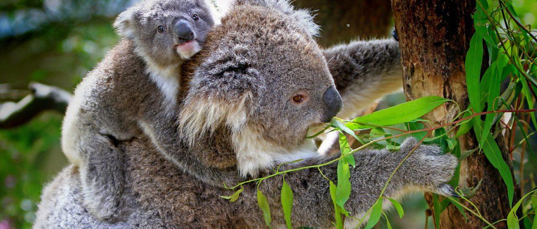 5 myths about Australia - debunked